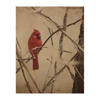 Impresión En Madera Un pájaro cardinal rojo en una rama en las maderas