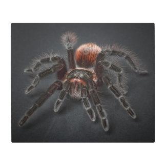 Impresión En Metal Araña melenuda del tarantula