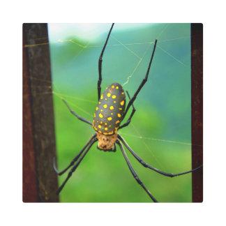 Impresión En Metal Cuál es araña