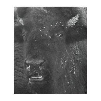 Impresión En Metal El bisonte americano de la sonrisa