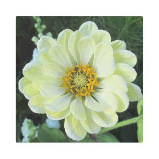 Impresión En Metal Flor amarilla clara de la dalia