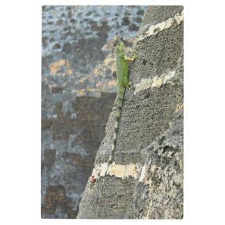 Impresión En Metal fotografía de la iguana