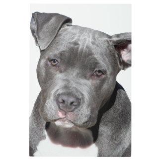 Impresión En Metal Pitbull Terrier americano