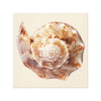 Impresión envuelta Seashell espiral de la lona