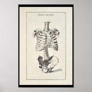 Impresión esquelética del arte de la anatomía