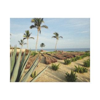 Impresión estirada México de la lona de Los Cabos Lona Estirada Galerias