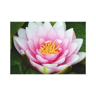 Impresión floral rosada del lirio de agua