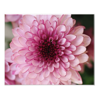 Impresión fotográfica de la flor rosada