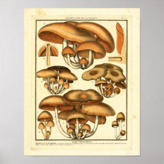 Impresión francesa del arte de las setas de Brown