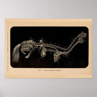 Impresión francesa del vintage de la anatomía del
