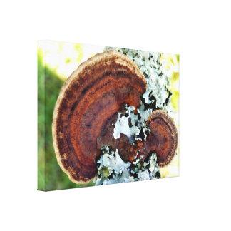 Impresión fungosa de la lona de Mazegill del roble