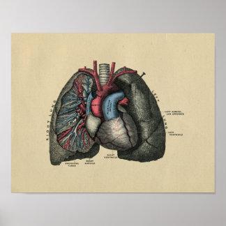 Impresión humana 1902 del vintage del corazón y de