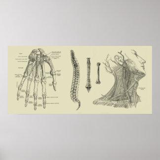 Impresión humana de la anatomía