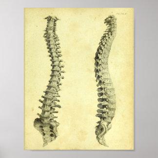 Impresión humana de la anatomía de la columna