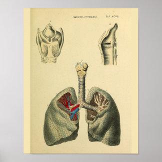 Impresión humana del arte de la anatomía de la