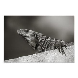 Impresión - iguana en la pared - maya de Riviera, Foto