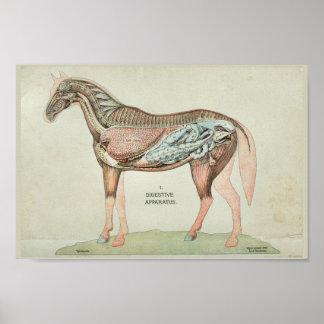 Impresión interna de la anatomía del aparato