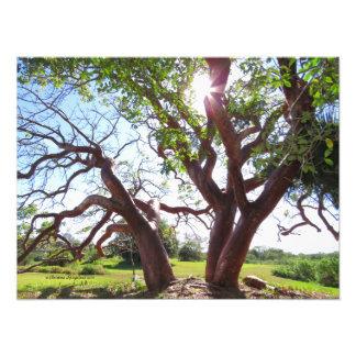 Impresión magnífica de Sun de los árboles del Foto