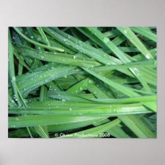 Impresión mojada de la hierba póster