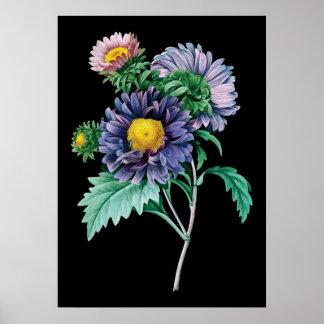Impresión negra botánica del fondo del aster póster