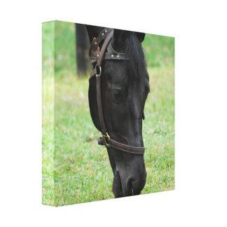 Impresión negra dulce de la lona del caballo impresiones de lienzo