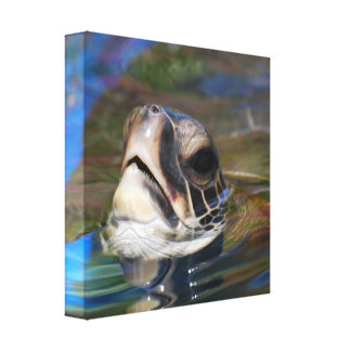 Impresión principal de la lona de la tortuga lienzo envuelto para galerías