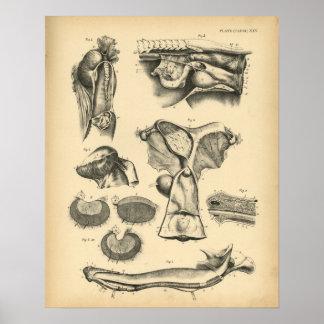 Impresión reproductiva 1908 del vintage de la