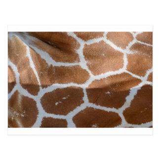 impresión reticulada de la piel de la jirafa postal