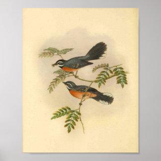 Impresión roja del vintage del pájaro del
