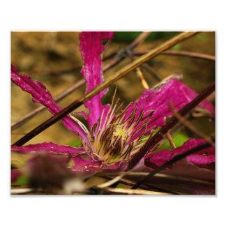 Impresión rosada de la foto del arte de la flor