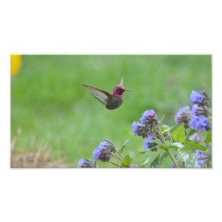 Impresión rosada de la foto del colibrí