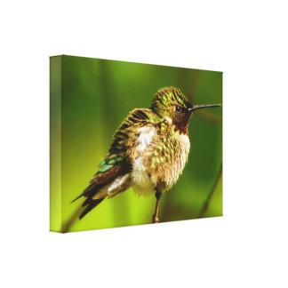 Impresión Rubí-Throated de la lona del colibrí