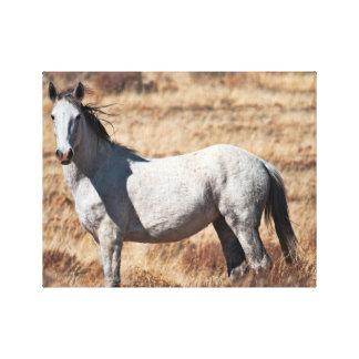 Impresión salvaje blanca de la lona del caballo