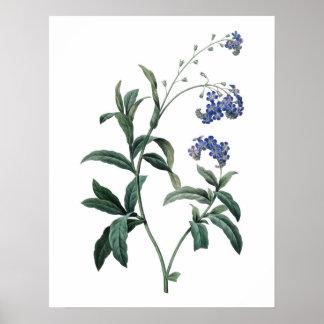 Impresión SUPERIOR botánica de la CALIDAD de la