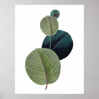 Impresión SUPERIOR botánica de la CALIDAD de las