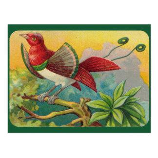 Impresión tropical del pájaro del vintage postal