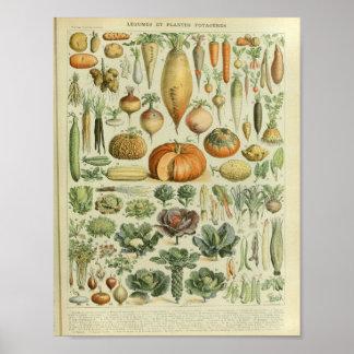Impresión vegetal del arte del color del vintage