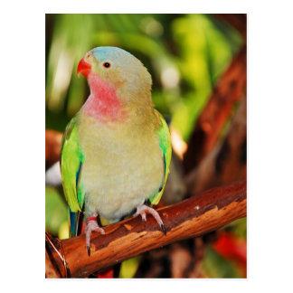 Impresión verde del parakeet de la princesa postal