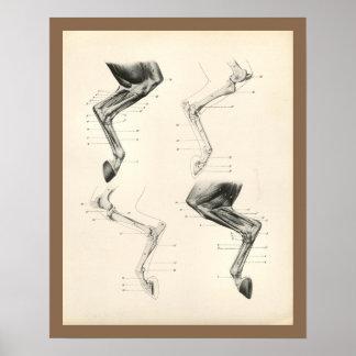 Impresión veterinaria de la anatomía de los huesos