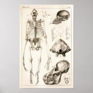 Impresión veterinaria de la anatomía del cráneo