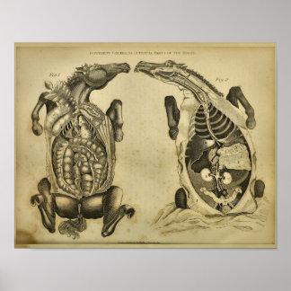 Impresión veterinaria del vintage interno de la