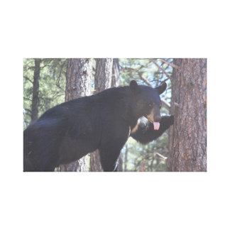 Impresiones de la lona del oso negro