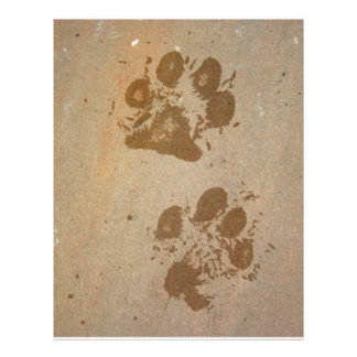 Impresiones mojadas de la pata folleto 21,6 x 28 cm