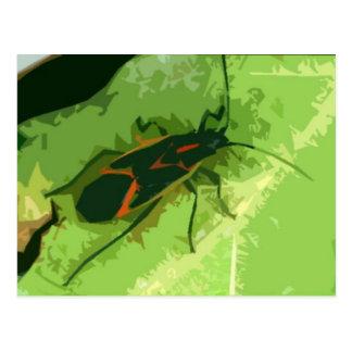 Insecto de Boxelder Postal