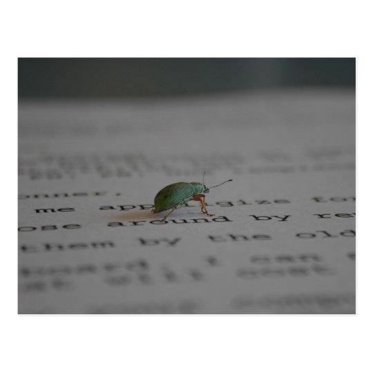 Insecto de la oficina postal