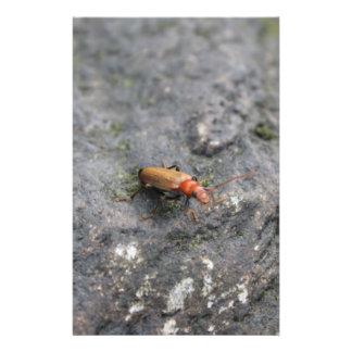 Insecto en una roca folleto 14 x 21,6 cm