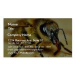 Insectos de las abejas tarjetas de visita