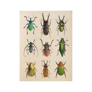 Insectos hermosos de la manía del escarabajo póster de madera