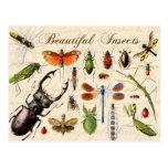 Insectos - los organismos más diversos de la tierr