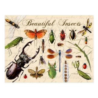 Insectos - los organismos más diversos de la tierr postales